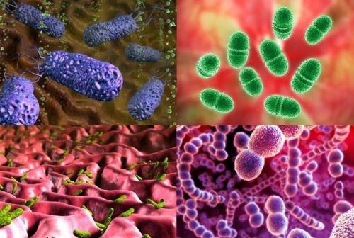 Бактерии симбионты животных реферат 9335
