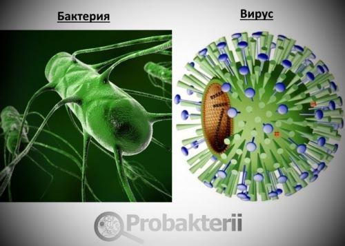 вирусы и бактерии картинки и названия
