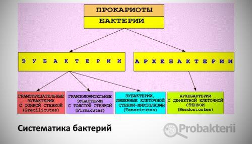 Систематика бактерий