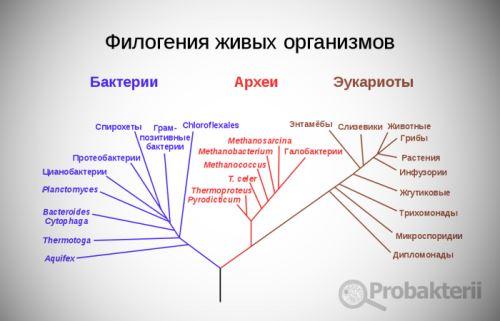 Систематика живых организмов