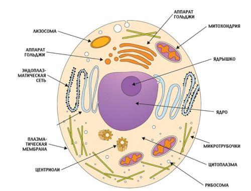 какие растительные средства от паразитов