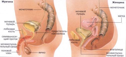 константин заболотный диетолог телефон