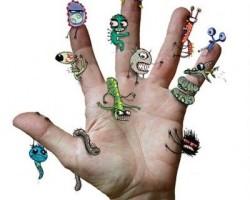 Какие бактерии живут на руках?