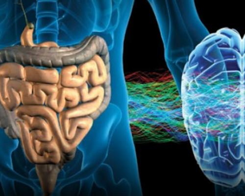 Бактерии, живущие в кишечнике, улучшают мозговую активность