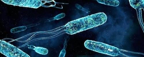 Для чего нужны жгутики бактериям и в чем их отличие от пилей, ворсинок, фимбрий