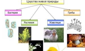 Кратко о биологии: свойства растений, бактерий, грибов и лишайников