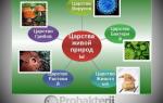 Сравнение строения и свойств бактерий в отличие от растений