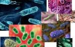 Какие существуют семейства различных бактерий