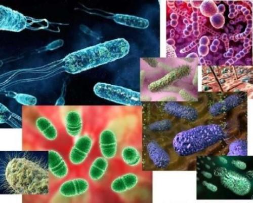 Где обитает большинство бактерий: самые популярные места