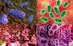 Какие бывают типы или виды бактерий и как их определить