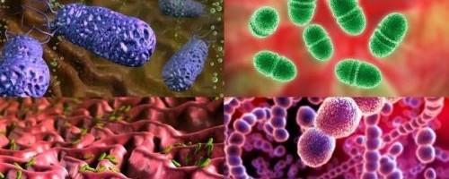 Разнообразие видов бактерий и способы их классификации