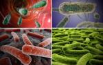 Опасность вирусов, инфекций и бактерий для человека