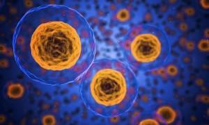 Самые полезные бактерии и их названия