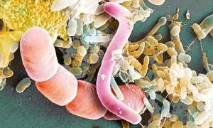 Вирусы, микробы и бактерии: в чем отличия?