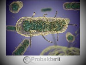Бактерия под микроскопом
