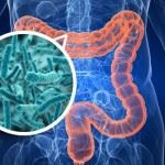 Бактерии в организме человека