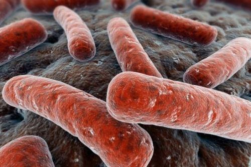 Бактерия туберкулеза под микроскопом