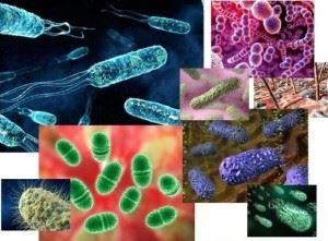 Разнообразие микрорганизмов