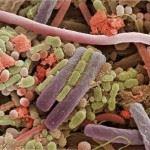 Разнообразие бактерий в продуктах