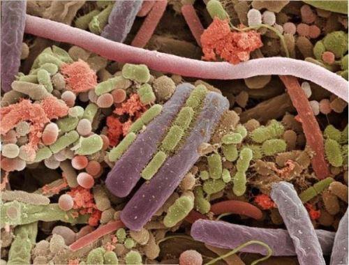 Что такое болезнетворные бактерии