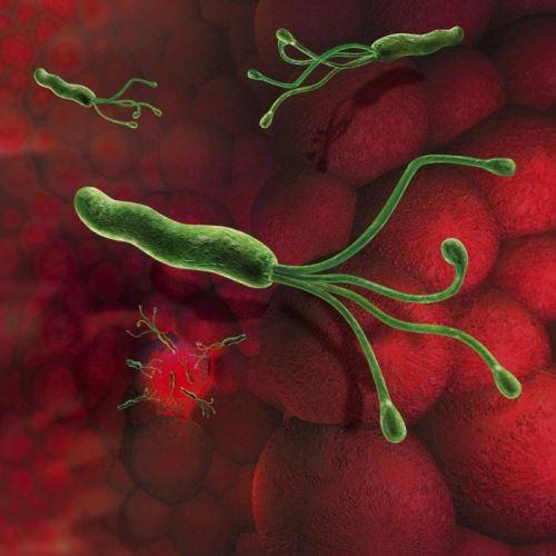 Бактериальный гастрит лечение