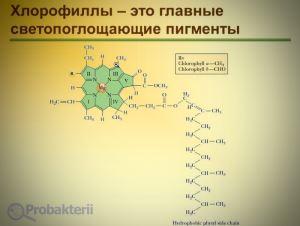 Бактериальные хлорофиллы, чем они отличаются от растительных