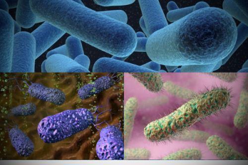 Бактерии мод микроскопом