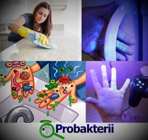 Бактерии на разных поверхностях и руках