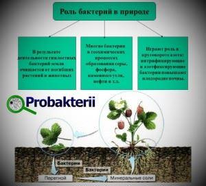 Роль бактерий в природе