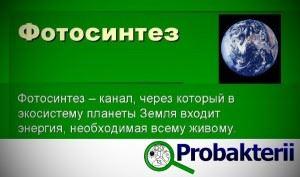 Роль фотосинтеза для нашей планеты