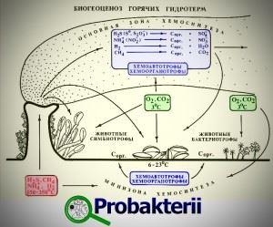 Схема хемосинтеза