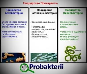 Таблица разделения прокариот на подцарства