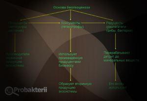 Основа беогеоценоза