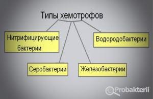 Типы хемотрофов