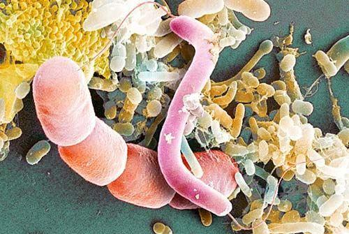 Разнообразие микробов