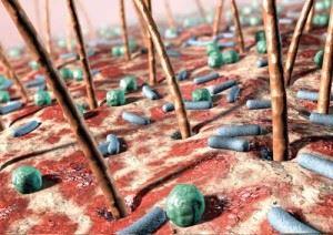 Кожа человека под микроскопом