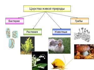 Живая природа делится на 4 царства