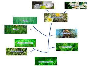 Схема классификации растений