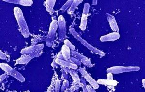 Фото метонообразующих бактерий под микроскопом