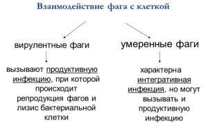 Таблица разновидности бактериофагов