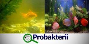 Бактерии для аквариума: до использования и полсе