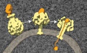 Введение токсина бактериями