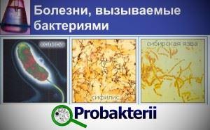 Холера, сифилис, сибирская язва - заболевания, вызываемые бактериями
