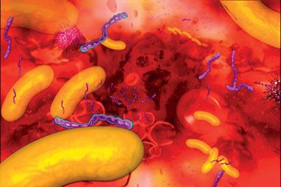 Анализ кала на бактерии