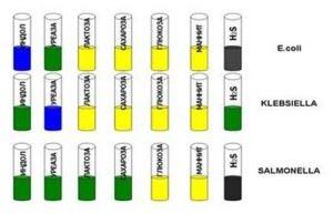 Идентификация микробов по ферментативной активности