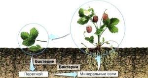 Роль почвенных бактерий