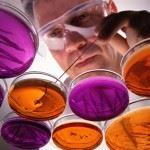 Изучение микробов в лаборатории
