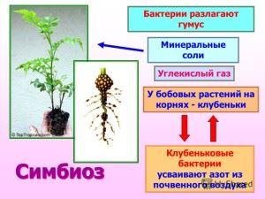 Схема симбиоза