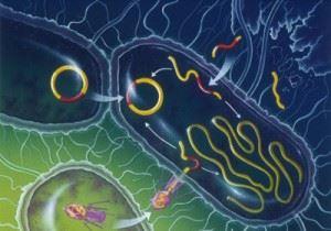 Генетическая мутация прокариотов
