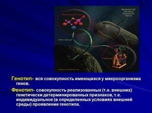 Генотип и фенотип